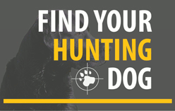 Find Your Hunting Dog