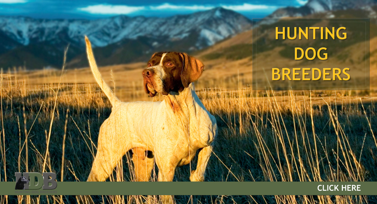 Hunting Dog Breeders